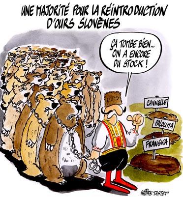 Une majorité pour la réintroduction d'ours slovènes dans les pyrénées