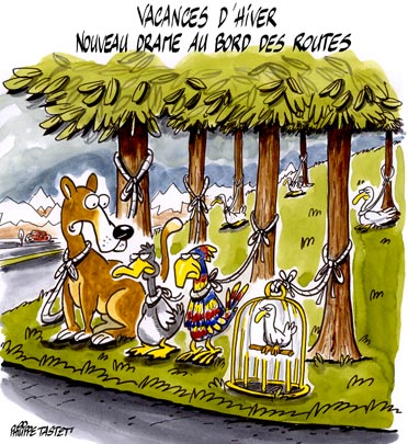 dessin : Grippe aviaire