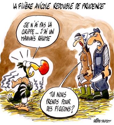 dessin : La filière avicole redouble de prudence